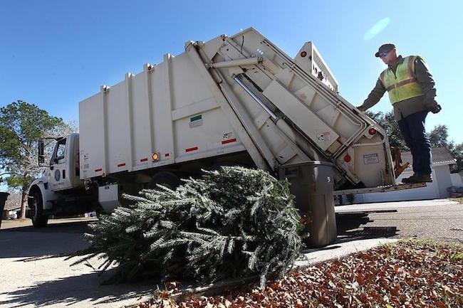 Christmas Tree Pick Up.Christmas Tree Pick Up In Sunbury
